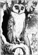 there-was-an-owl-lived-in-an-oak