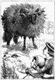 bah-bah-black-sheep